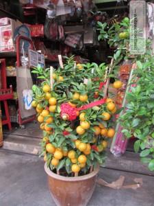 Mandarinenbäumchen, geschmückt für das chinesische Neujahrsfest