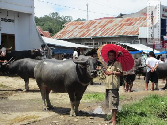 Markttag in Rantepao