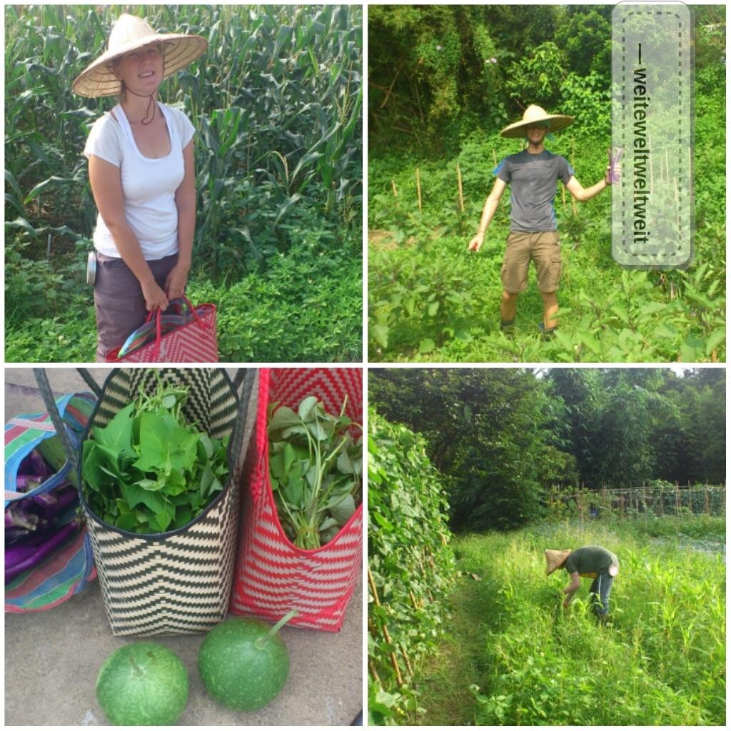 unsere_kleine_Farm