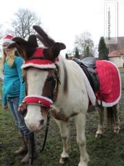 Christmas everywhere, Have a look on this Christmas horse (in Freital, near Dresden)